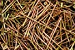 (300) Phillips Bugle Head 10 x 4 Coarse Drywall Wood Screw - Yellow Zinc