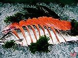 北海道産 時不知化粧箱 贈答用 時鮭 高級品
