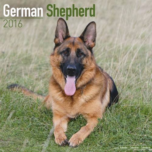 German Shepherd Calendar - Only Dog Breed German Shepherd Calendar - 2016 Wall calendars - Dog Calendars - Monthly Wall Calendar by Avonside