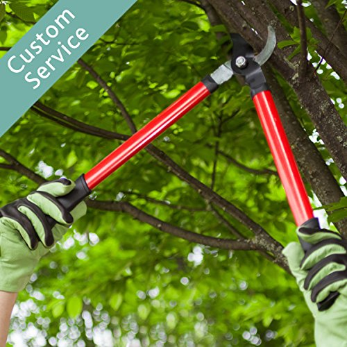 hire-an-arborist