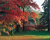 Clive Nichols Garden Collection 1000 Piece Puzzle - Autumn Foliage at Westonbirt, Gloucestershire