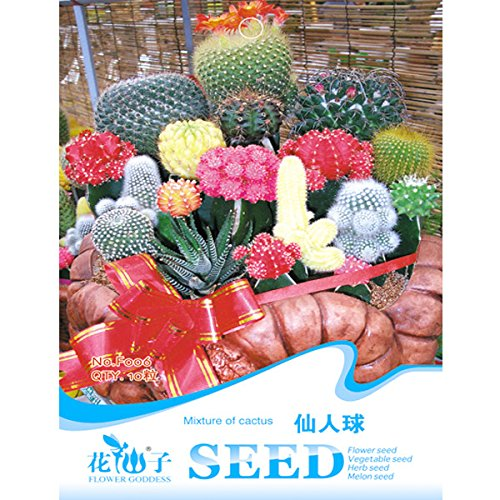 mixture-cactus-seeds-succulent-flower-seeds-10pcs-garden