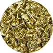 Springfield Leather Company\'s Gold Plate Medium Double Cap Rivets 50pk
