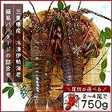 三重県産 伊勢海老詰合せ 4尾で約750g 刺身用瞬間冷凍 伊勢エビ 尾数選べます