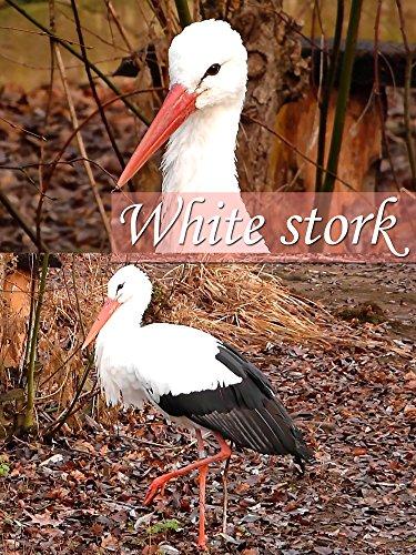 White stork on Amazon Prime Instant Video UK