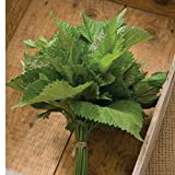 David's Garden Seeds Herb Shiso Green SL948A (Green) 200 Open Pollinated Seeds (Color: Green)