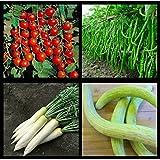 SHOP360 Hybrid Seeds - Cherry Tomato Seeds , Green Chilli Seeds , White Radish Seeds , Long Melon Seeds ( Pack...
