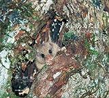 ヤマネにあえた日: 小さな国の天然記念物