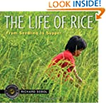 The Life of Rice: From Seedling to Su...