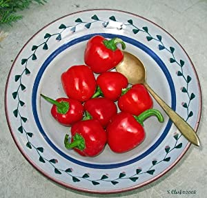 """(VPEPSM)~""""RED MINI"""" PEPPER~Seeds!!~~~~~~The Talk of the Veggie"""
