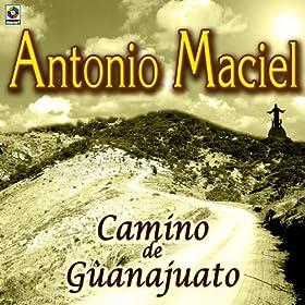Camino De Guanajuato