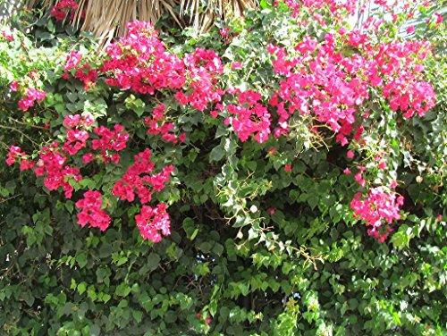Lais Puzzle Blumen 2000 Teile