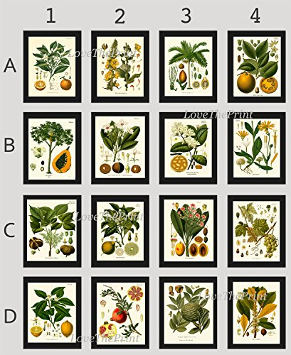 botanical-set-of-16-prints-antique-beautiful-lemon-grape-pomegranate-orange-lime-papaya-nuts-tropica