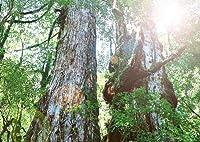 お部屋の消臭力 すみきった森林の香り 400ml