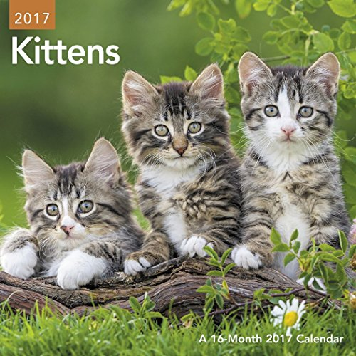 Kittens Mini Wall Calendar (2017)