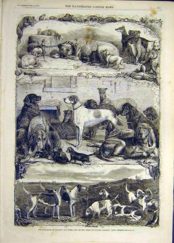 1861 Exhibition Sporting Dogs Holborn Prize Animal
