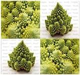 20 VERONICA ROMANESCO BROCCOFLOWER Cauliflower seeds ~ Heat tolerant and uniform