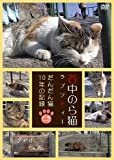 谷中のら猫ラプソディー~だんだん猫10年の記録~ [DVD]