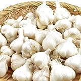 国華園 ニンニク種球 福地ホワイト六片 1kg