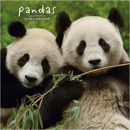 Pandas Wall (BROWNT) - 2008 Calendar - Buy Pandas Wall (BROWNT) - 2008 Calendar - Purchase Pandas Wall (BROWNT) - 2008 Calendar (Calendars, Office Products, Categories, Office & School Supplies, Calendars Planners & Personal Organizers, Wall Calendars)