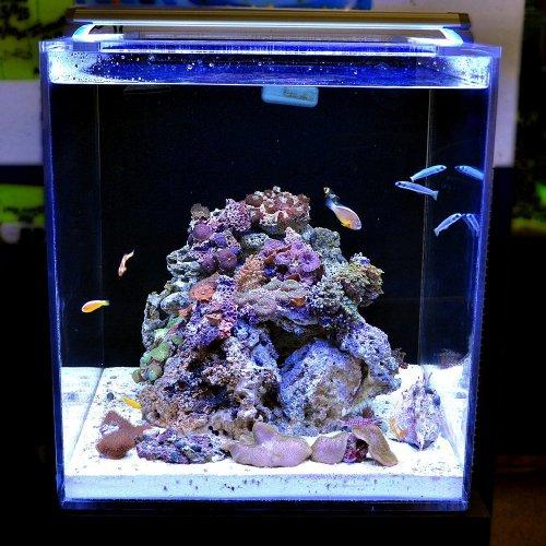 Finnex Ray2 Aquarium Day/Actinic LED Light, 48-Inch