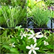 Bloomsz Waterplant Floater (Acorus/Abemopsis/Carex)