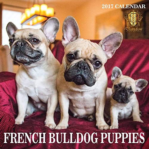 FRENCH BULLDOG CALENDAR - PUPPIES - 2017 MONTHLY WALL CALENDAR -LARGE- OPENS TO 14X23.5 INCHES TALL (Bulldog Presents compare prices)