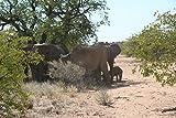 Image de Faszination Wüste - Namib: Die älteste Wüste der Welt