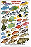 tropical marine ecology a field guide to belize