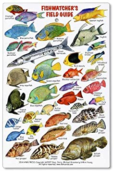 The gallery for tropical fish identification for Atlantic game fish
