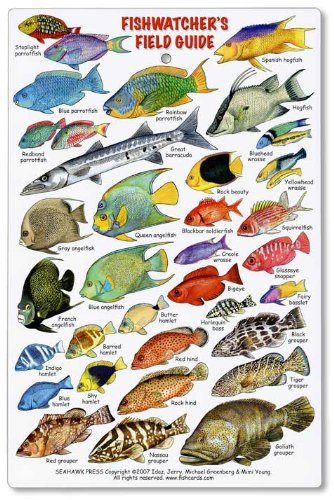 Fishwatchers Field Guide: Fishes of Tropical Atlantic & Caribbean ID ...