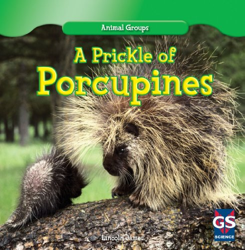 Group Porcupines