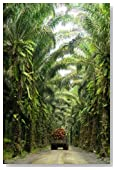 Oil Palm Estate Journal: 150 page lined notebook/diary
