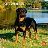 Rottweilers 2013 Square 12X12 Wall Calendar