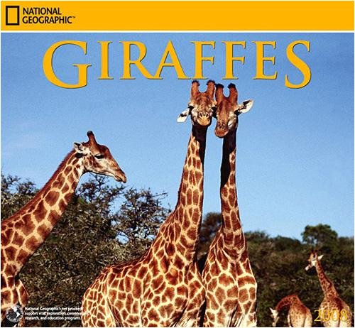 Giraffes National Geographic 2008 Wall Calendar - Buy Giraffes National Geographic 2008 Wall Calendar - Purchase Giraffes National Geographic 2008 Wall Calendar (Zebra Studios, Office Products, Categories, Office & School Supplies, Calendars Planners & Personal Organizers, Wall Calendars)