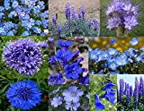 """Bamboo Cove Farm Seeds Annuals & Perennials """"Best of the Blues"""" Wildflower Seeds With a FREE Wildflower gift, 1000 seeds"""