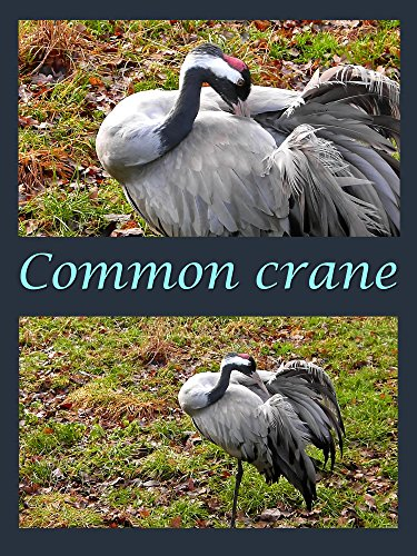 Clip: Common crane on Amazon Prime Instant Video UK