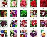 トゥルーブラッドレアブラックローズの種、レア驚くほど美しい黒薔薇赤いエッジ苗種子200個/ロットガーデン盆栽プラ