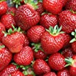 Seascape Strawberry Plants Organic 10 Bare Root Crowns Day Neutral Strawberry - Super Sweet Berries Stargazer Perennials