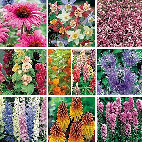 pack-x12-mixed-varieties-garden-perennial-plug-plants-starter-pack