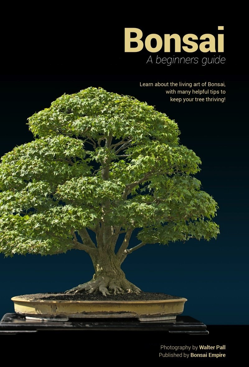 Bonsai: A beginners guide Kindle Edition