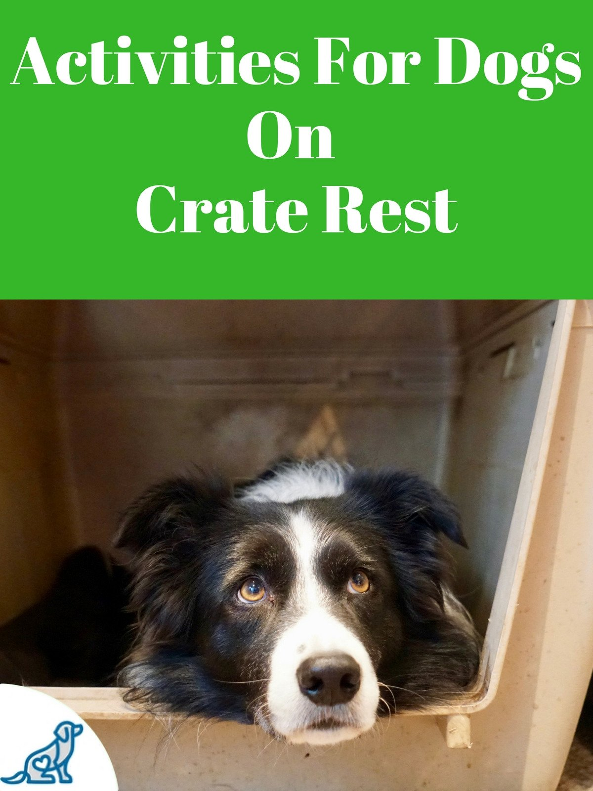 Activities For Dogs On Crate Rest