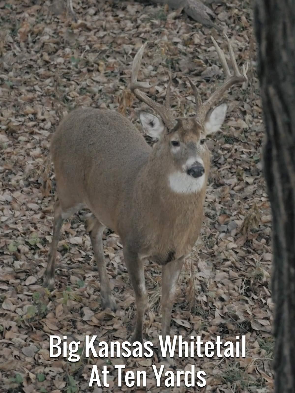 Big Kansas Whitetail At Ten Yards