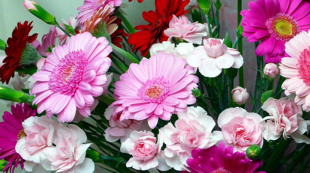 ガーベラ 赤 花