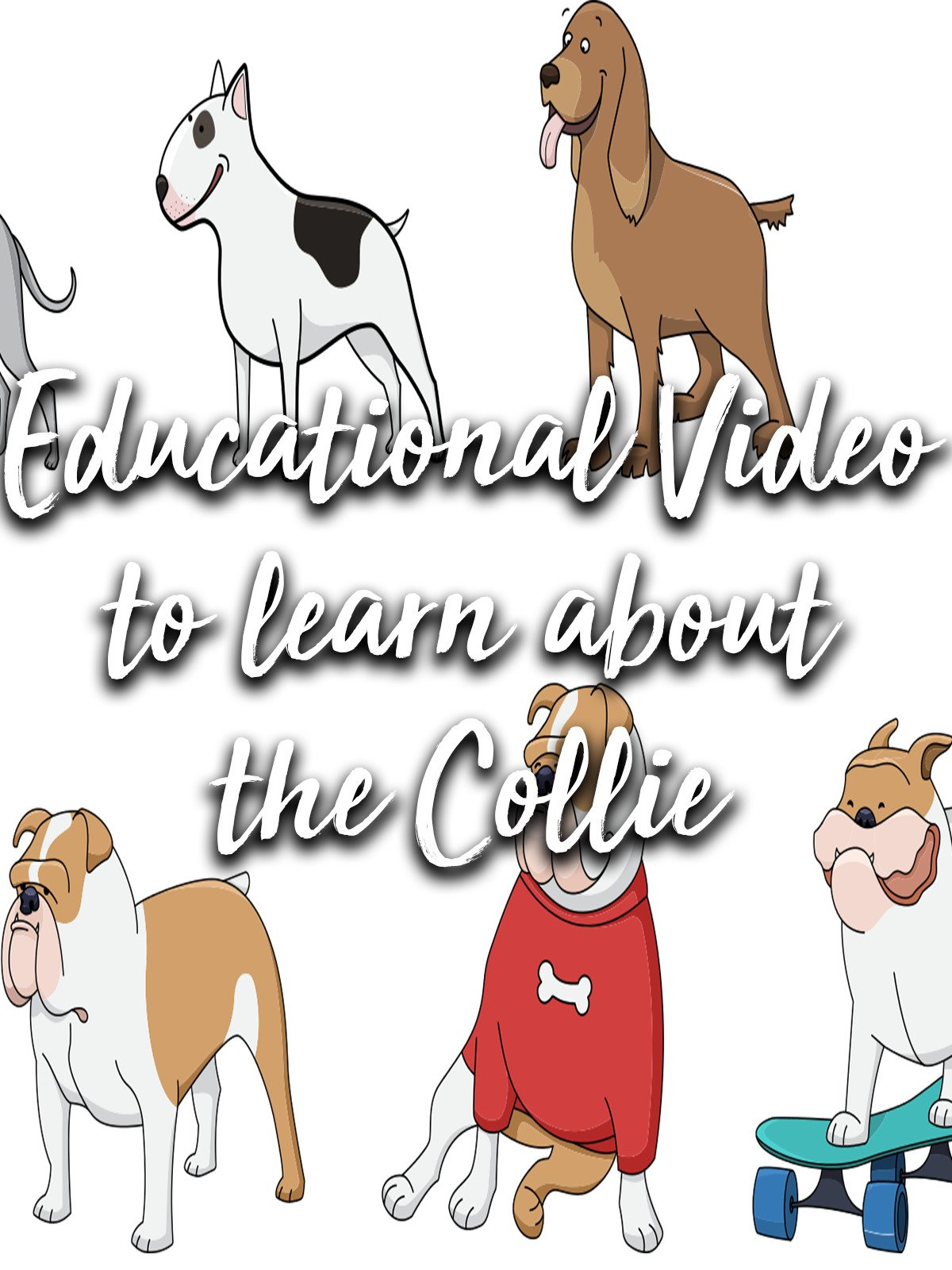 Educational Video to learn about the Collie