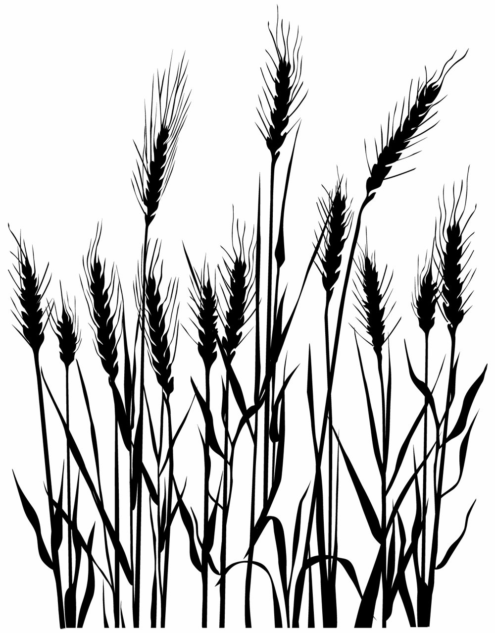Wheat Line Drawing