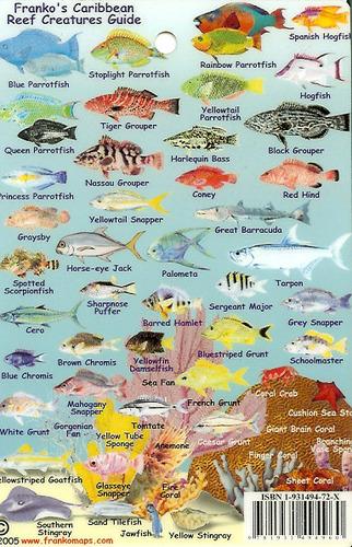 Caribbean reef creatures guide mini caribbean fish card for Caribbean reef fish