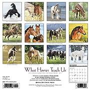 What Horses Teach Us 2017 Wall Calendar