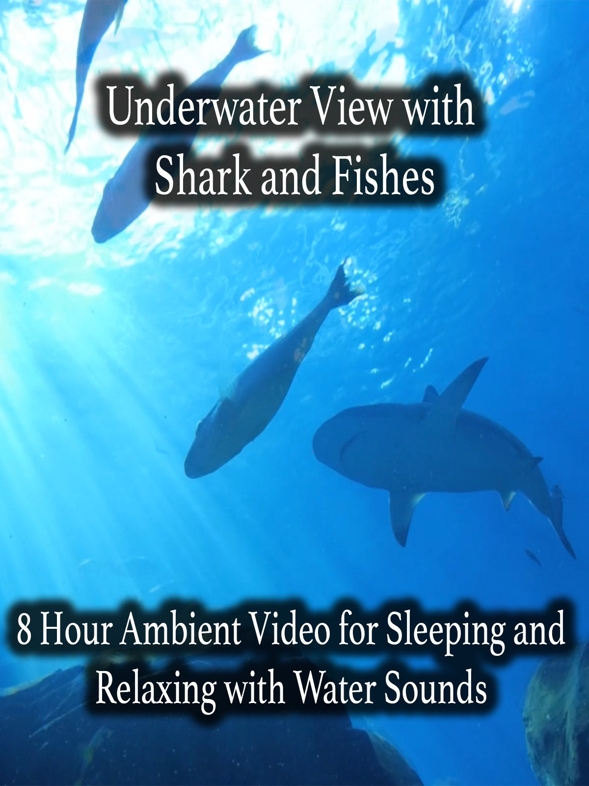 Underwater View with Shark and Fishes 8 Hour Ambient Video for Sleeping and Relaxing with Water Sounds