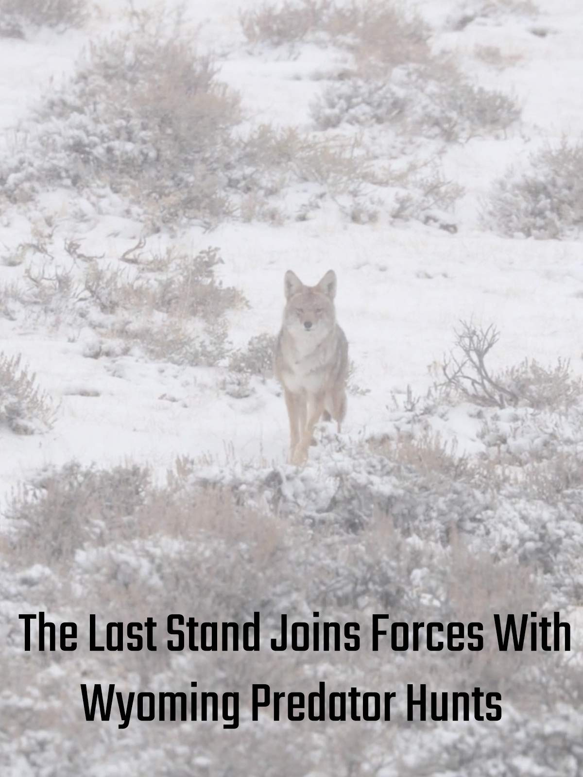 The Last Stand Joins Forces With Wyoming Predator Hunts